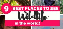 places to see Wildlife