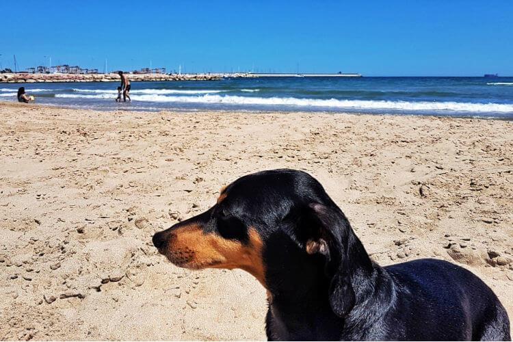 playas dog friendly
