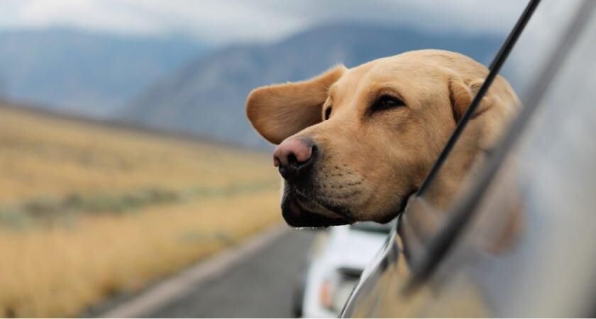 vacaciones con perro en coche