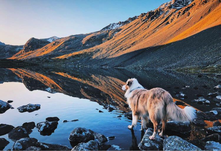 vacaciones con perro en la montaña