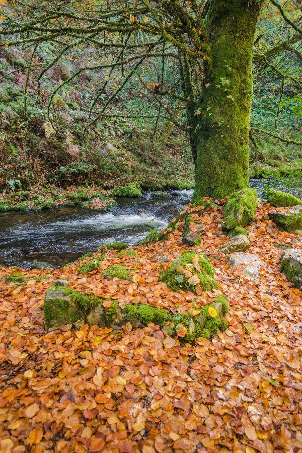 Bosque de Muniellos en otoño