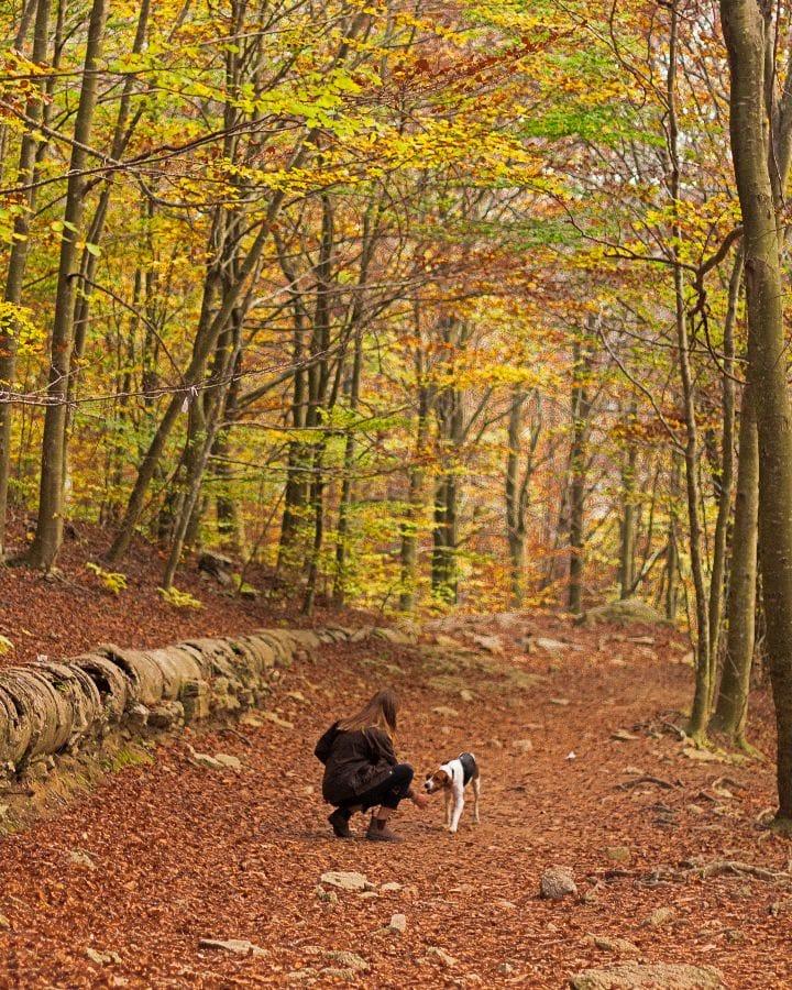 Montseny, fotos de otoño en España