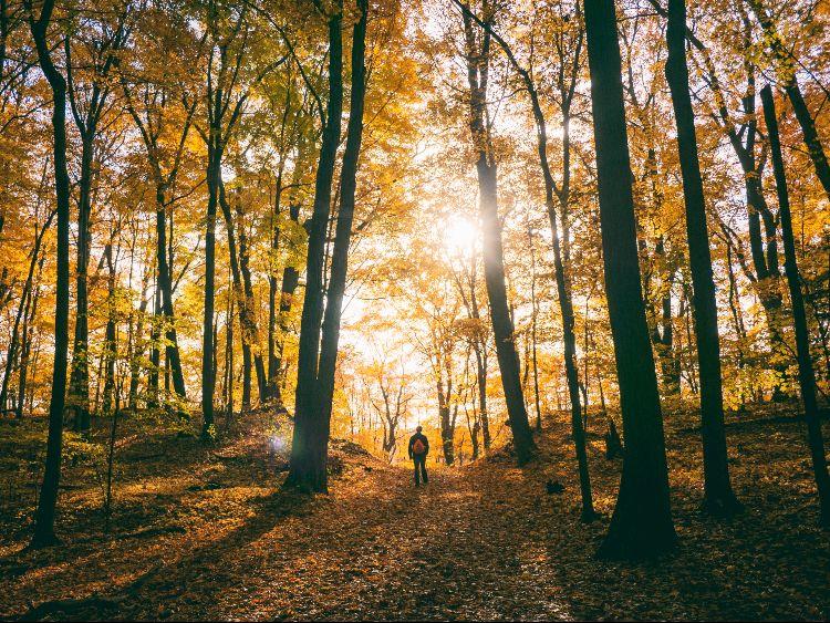 Viajes baratos en otoño