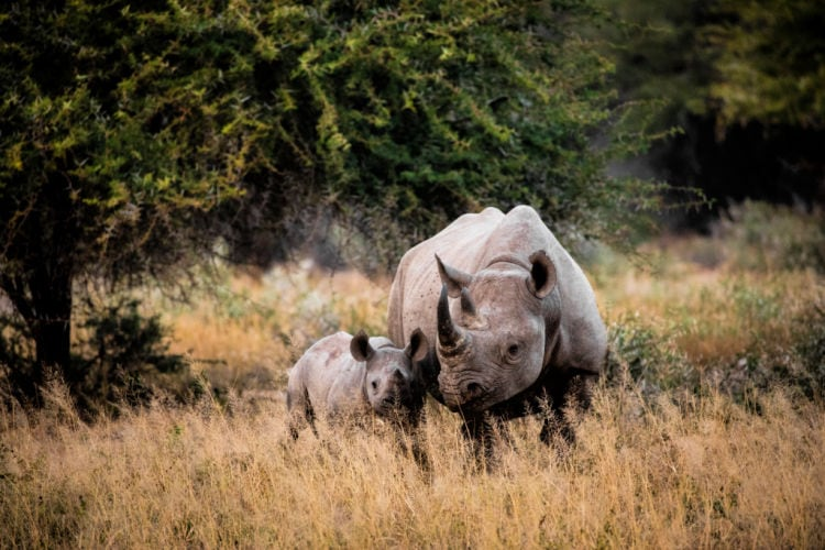 Cuáles son los mejores países para hacer un safari