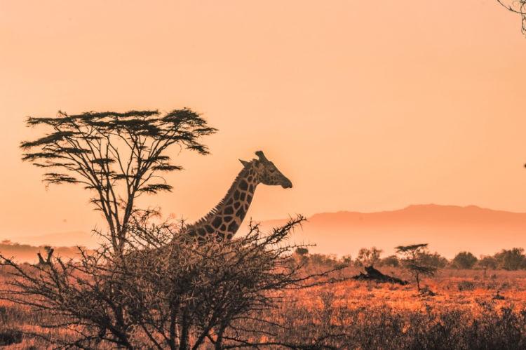 Mejores safaris africanos