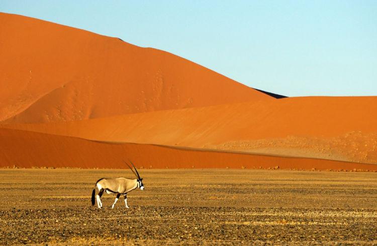 Principales safaris de africa