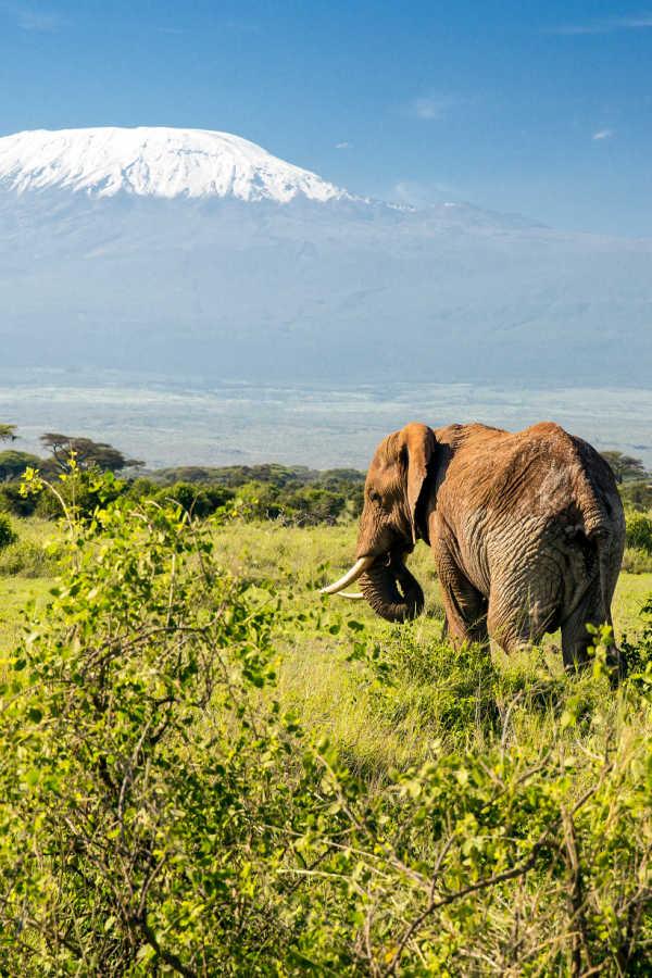 los mejores lugares para hacer safari